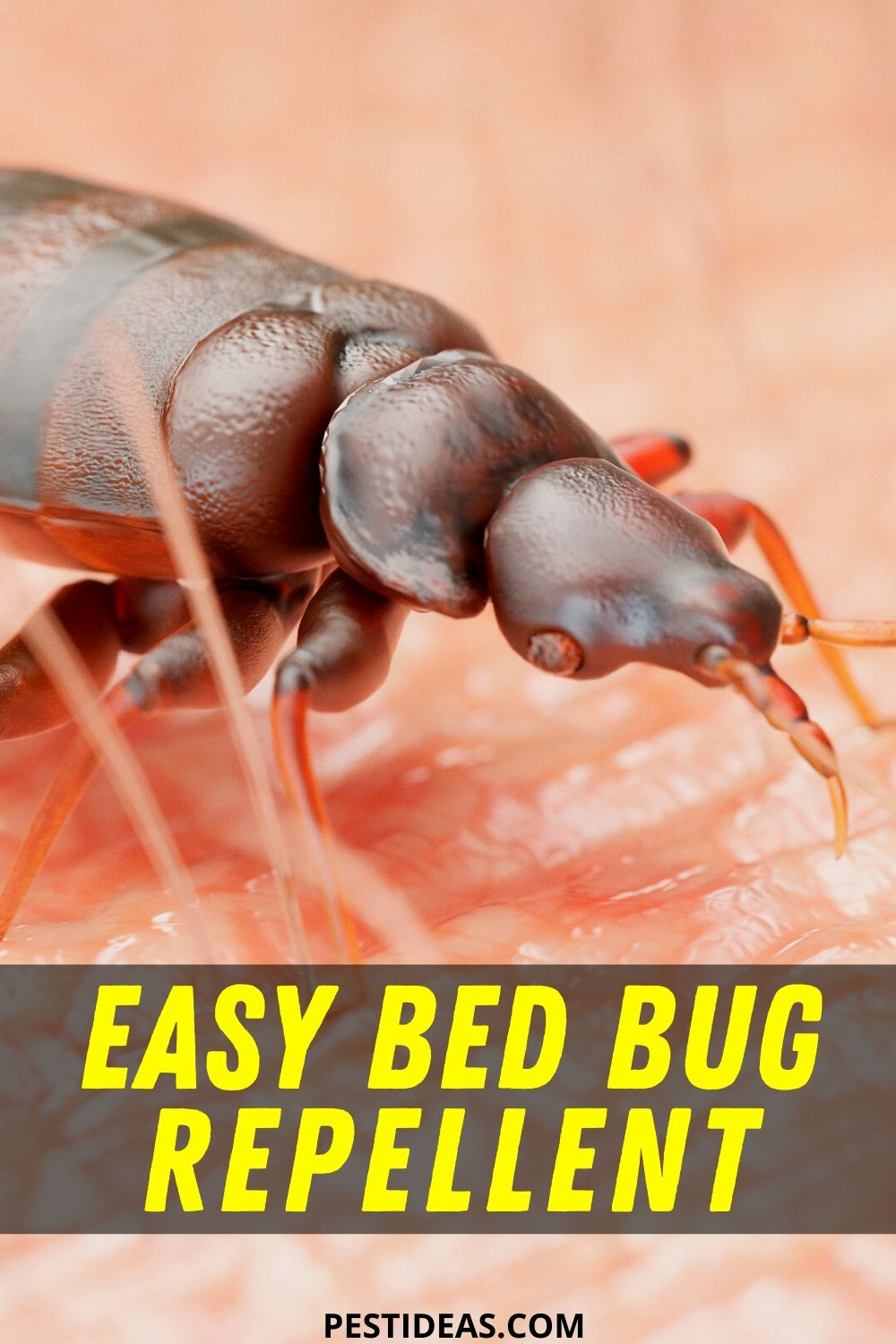 Easy Bed Bug Repellent