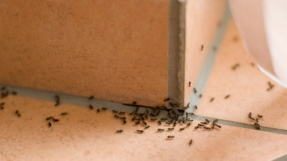 Get Rid of Ants in Bathroom