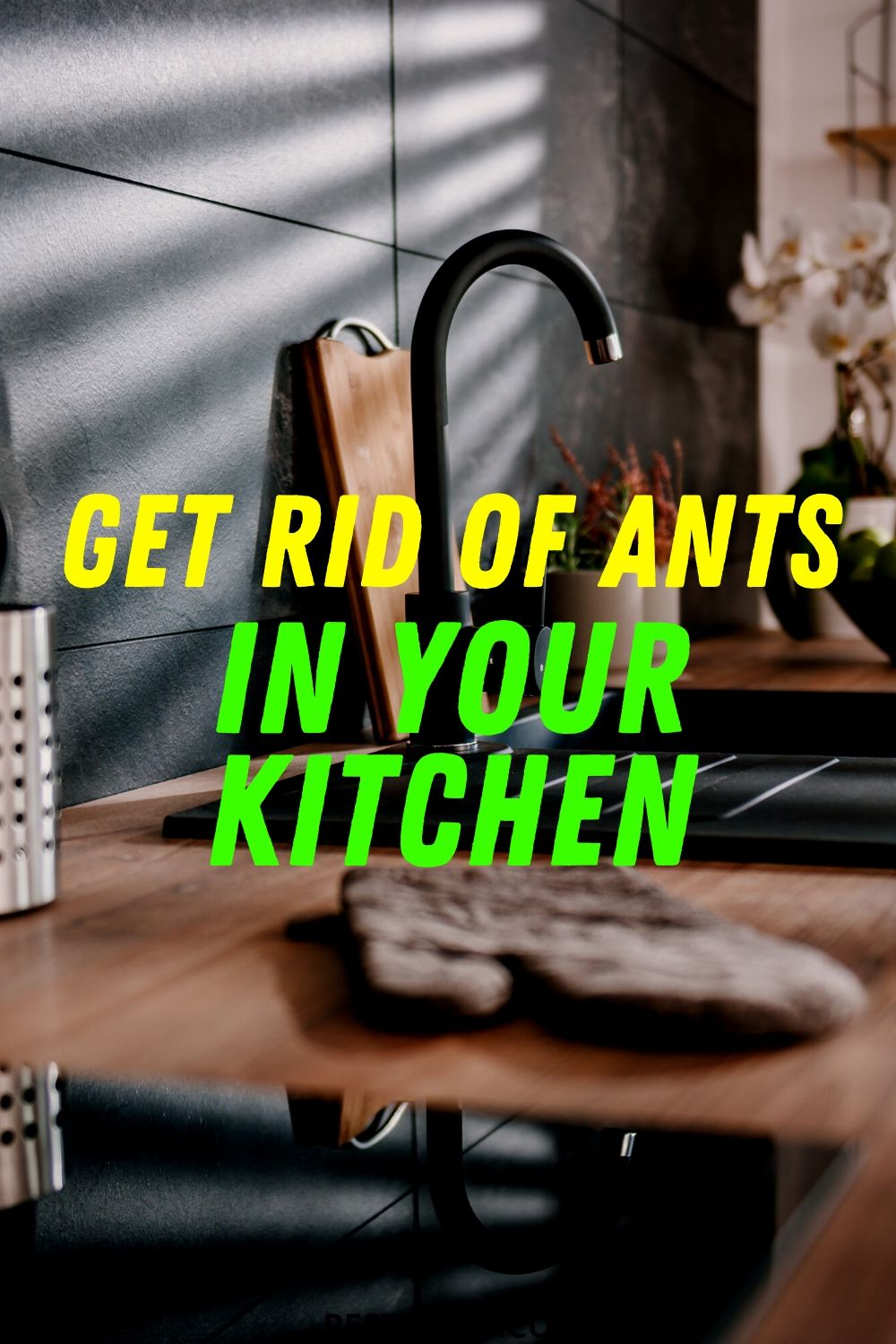 Get Rid of Ants in Your Kitchen