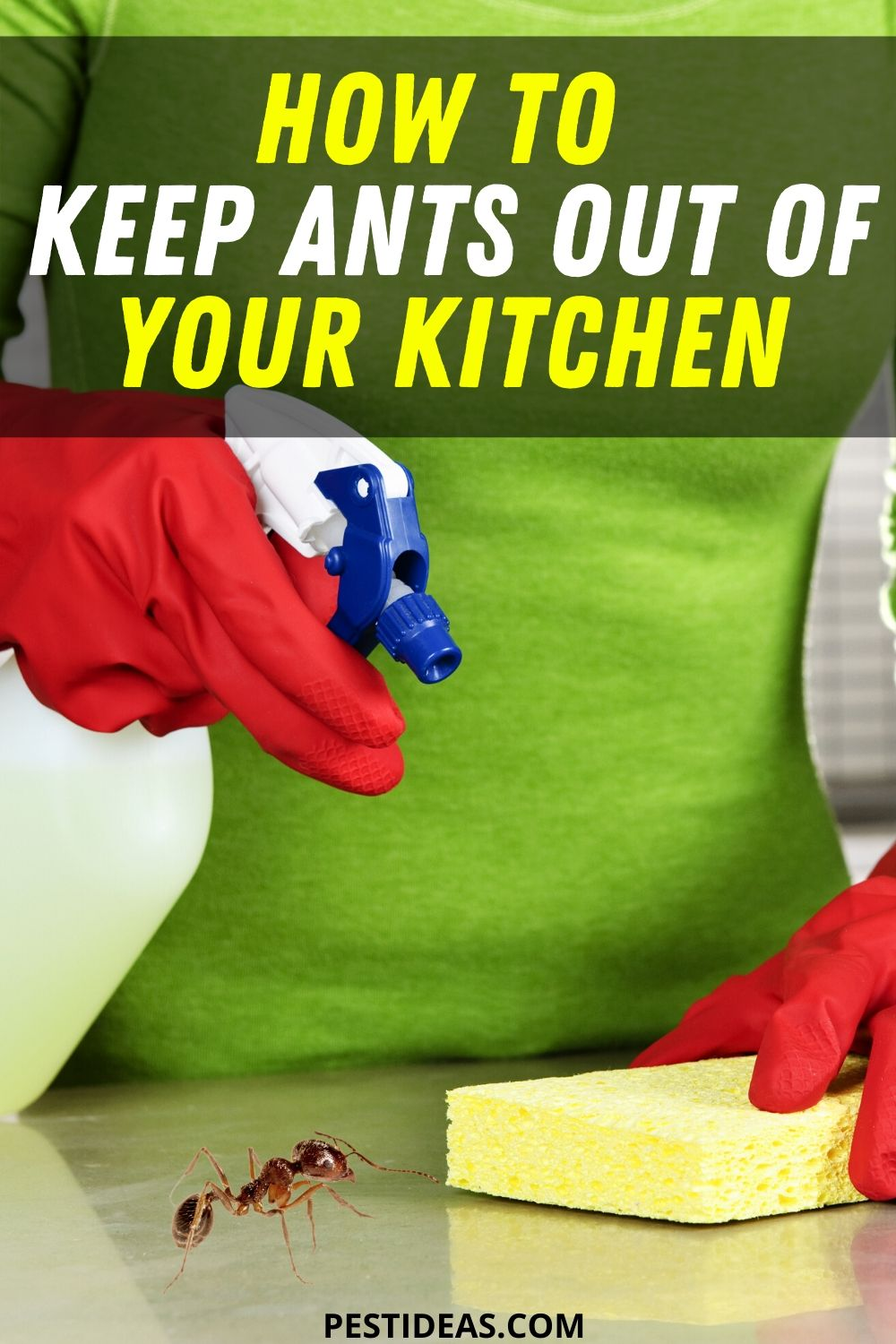 How to Keep Ants out of Your Kitchen