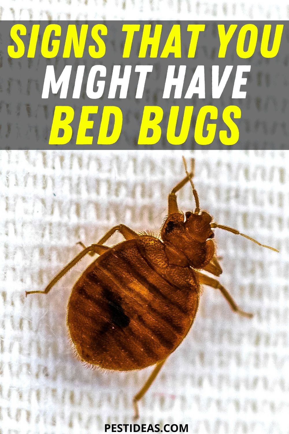 Signs that you might have bed bugs