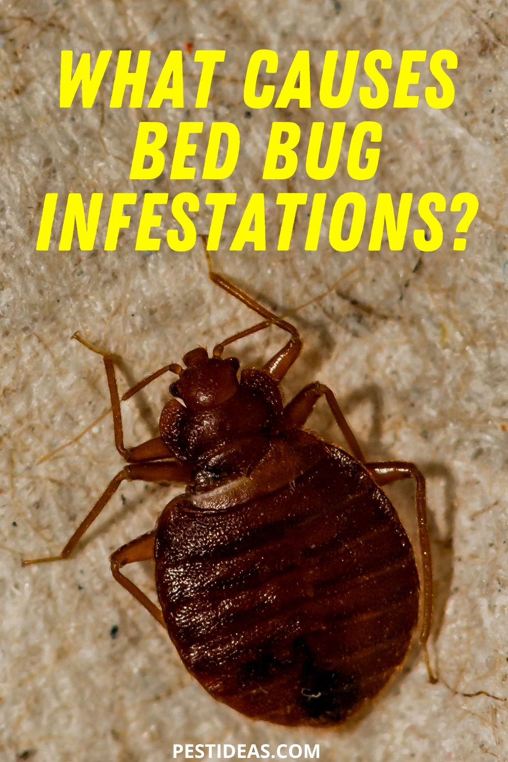 What causes bed bug infestations