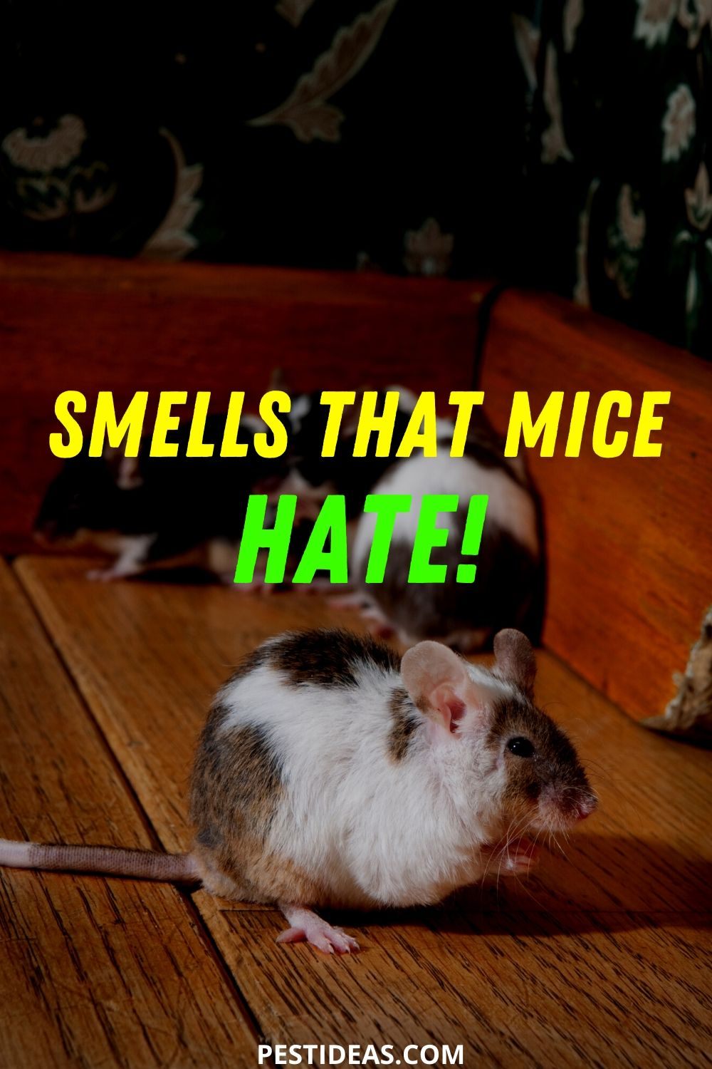 smells that mice hate