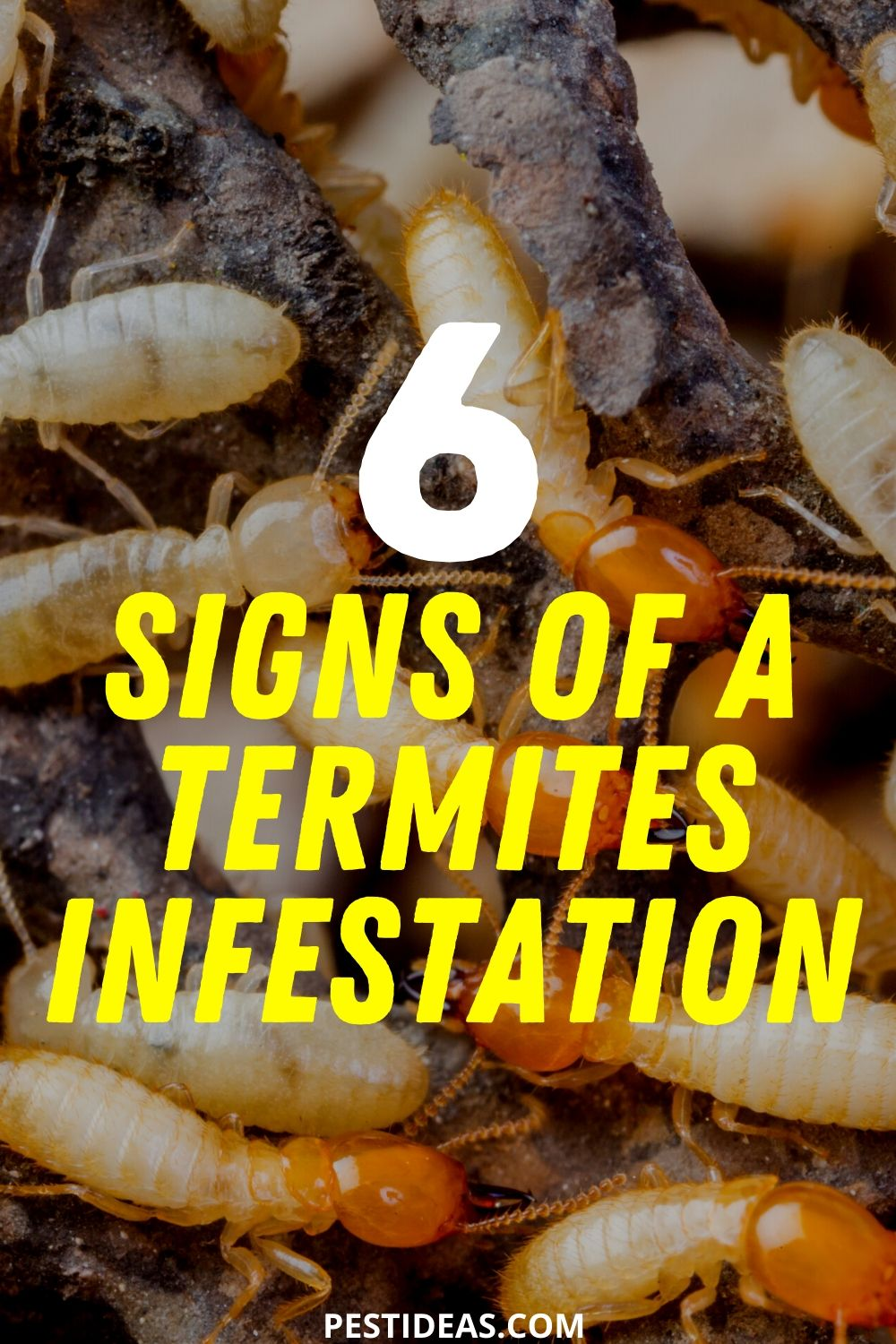 6 Signs of a Termite Infestation