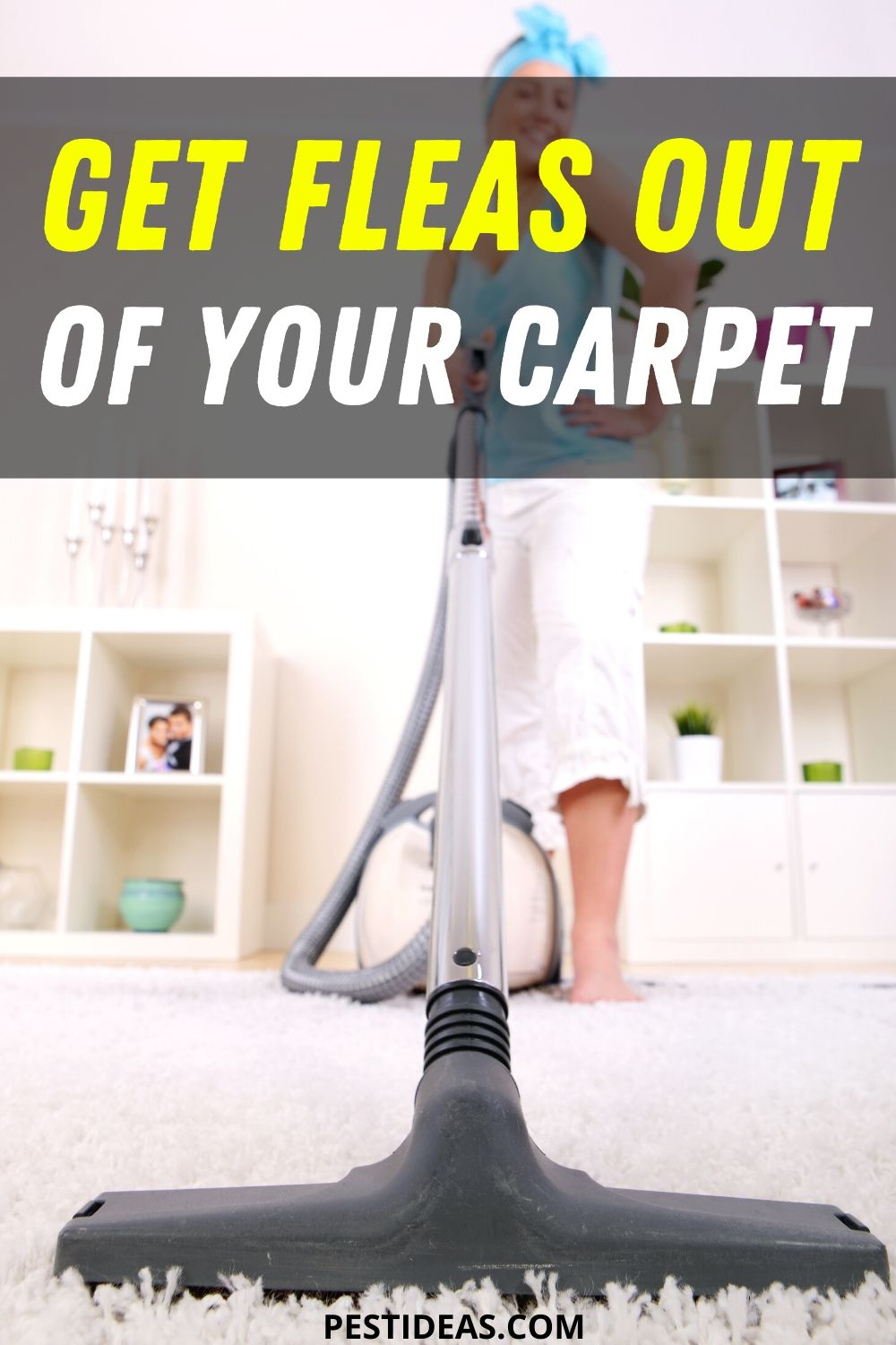 Get Fleas Out of Your Carpet