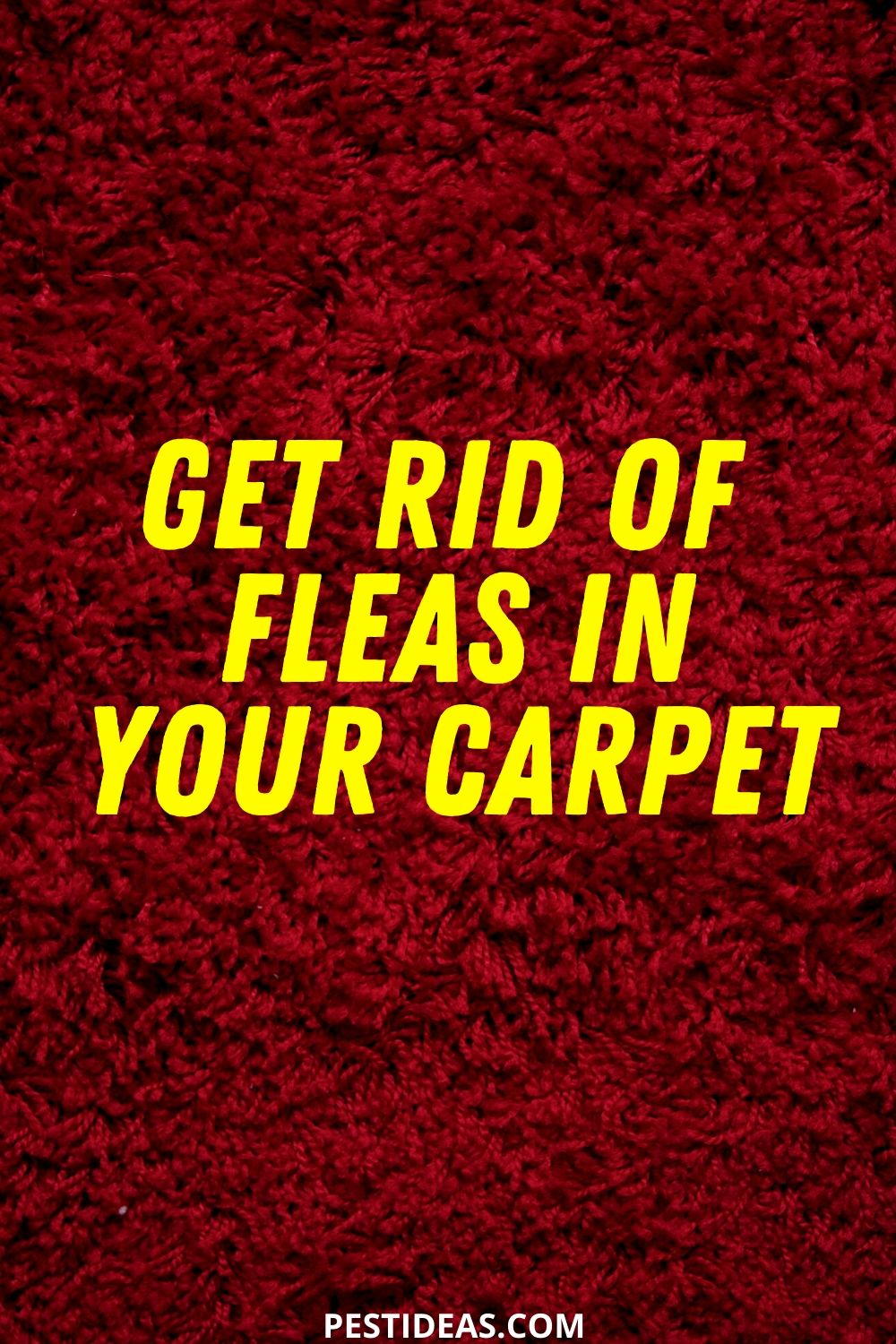 Get Rid of Fleas in Your Carpet