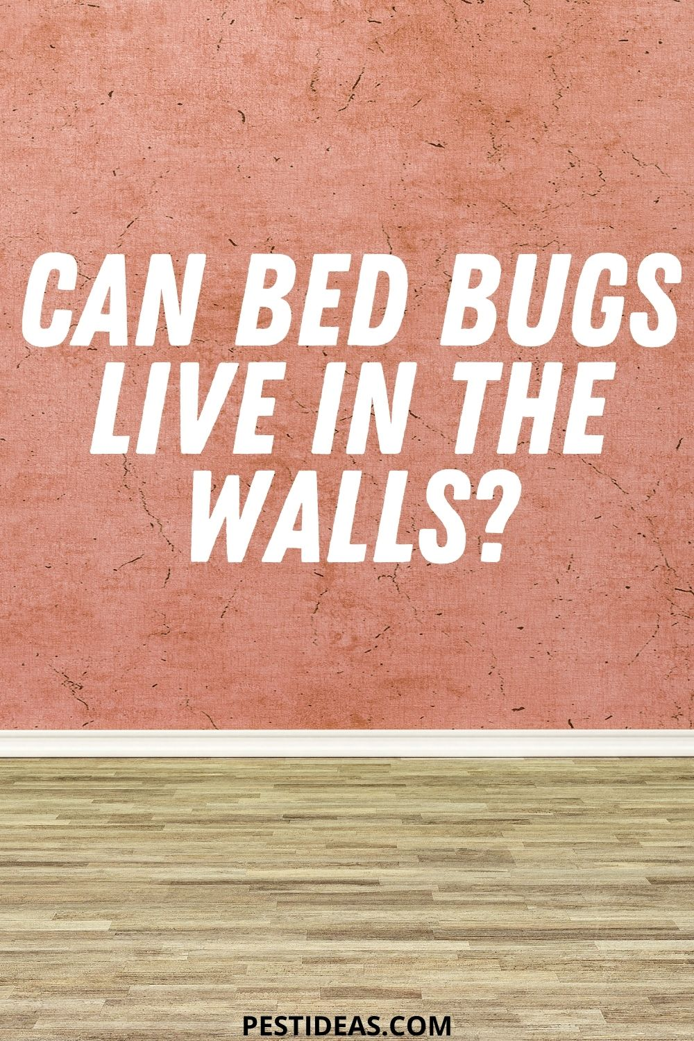 Can Bed Bugs Live in the Walls