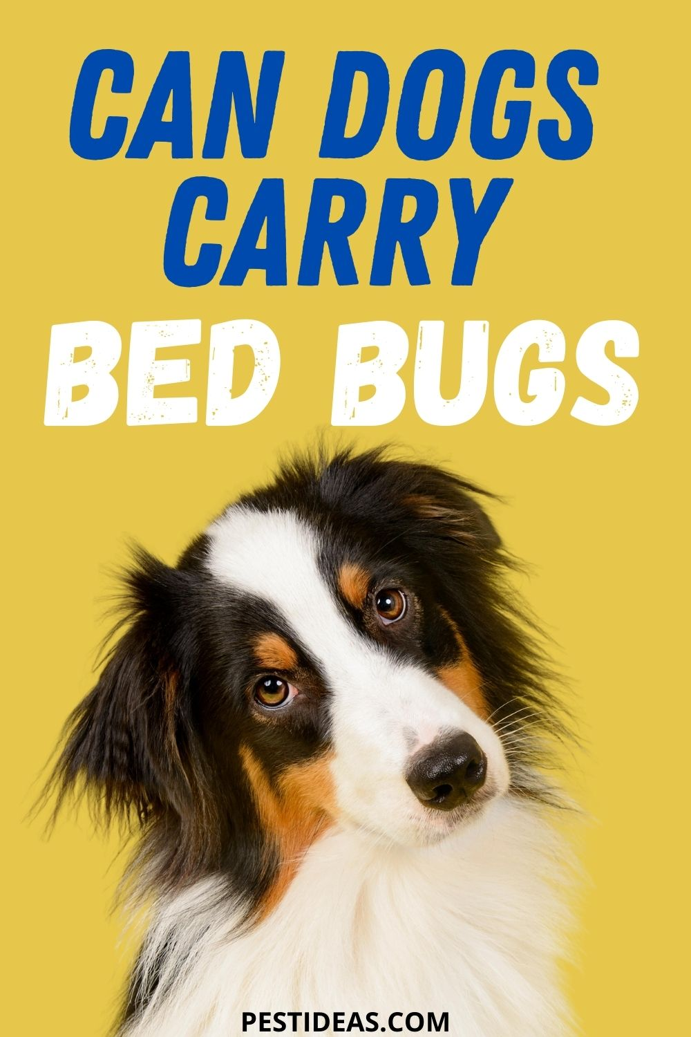 Can Dogs Carry Bed Bugs