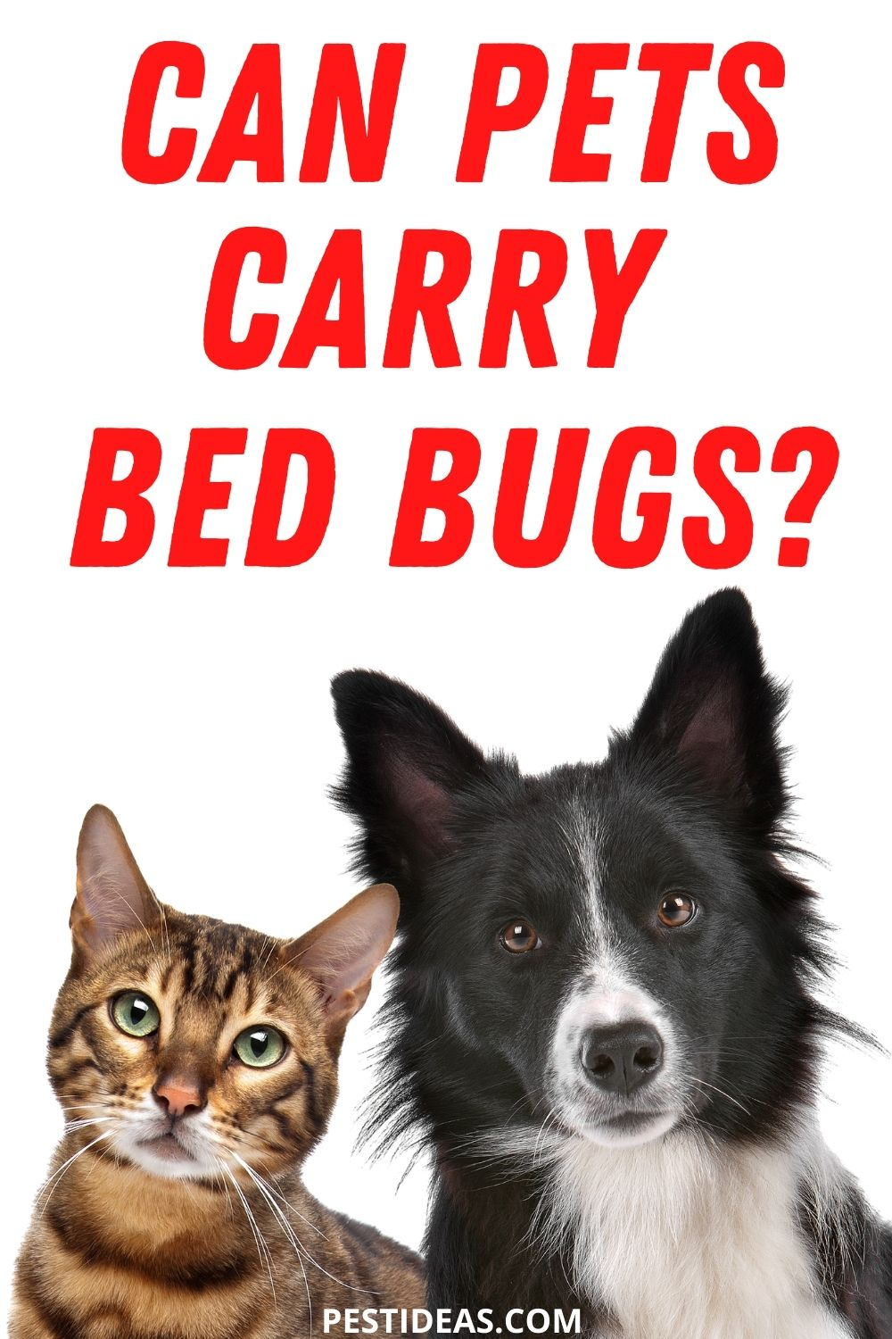 Can Pets Carry Bed Bugs