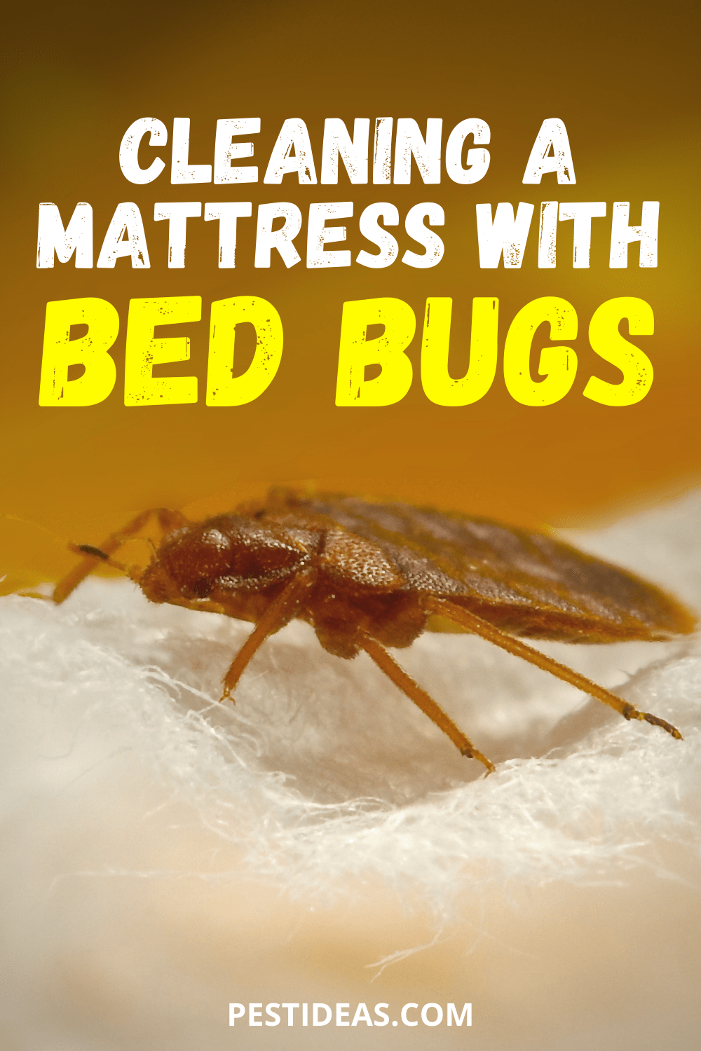 Cleaning a Mattress With Bed Bugs