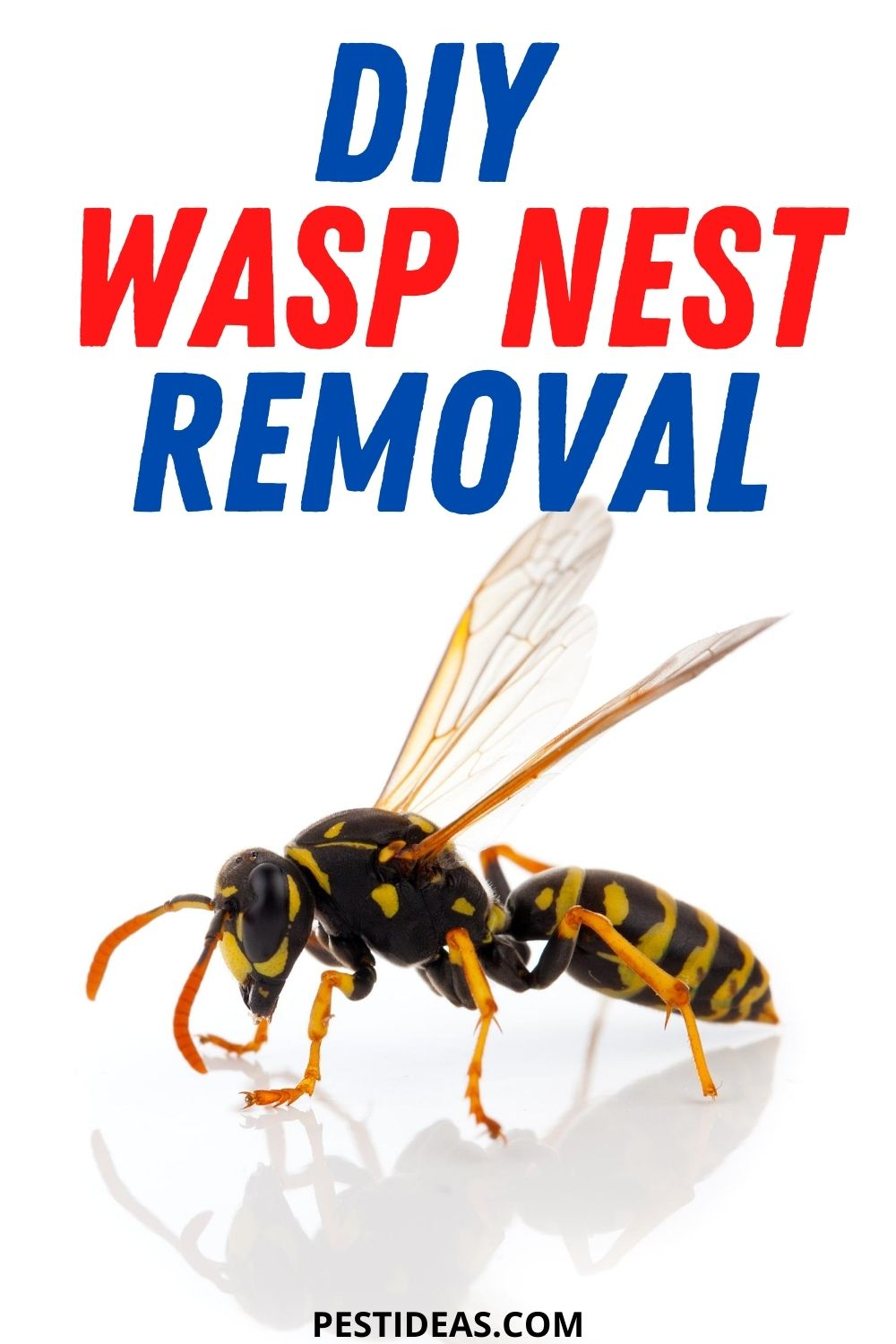 DIY Wasp Nest Removal