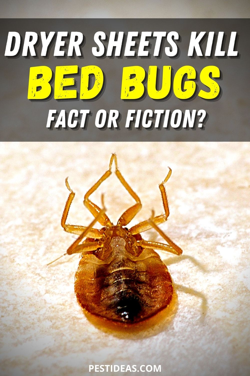 Dryer Sheets Kill Bed Bugs