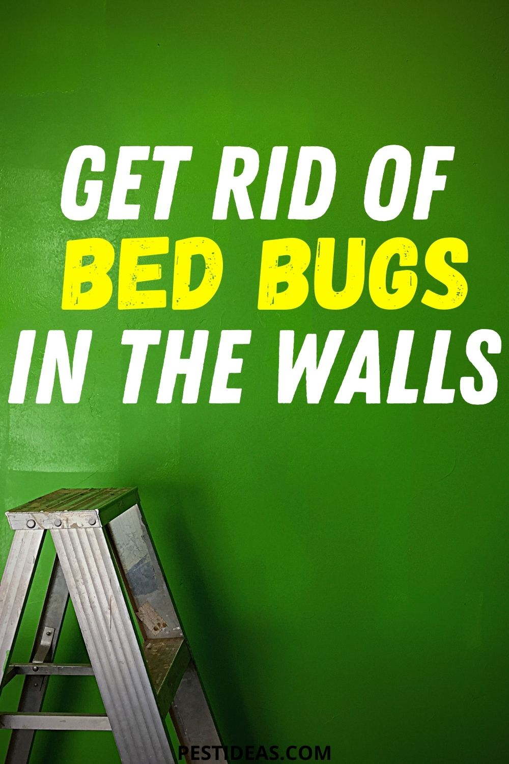 Get Rid of Bed Bugs in The Walls