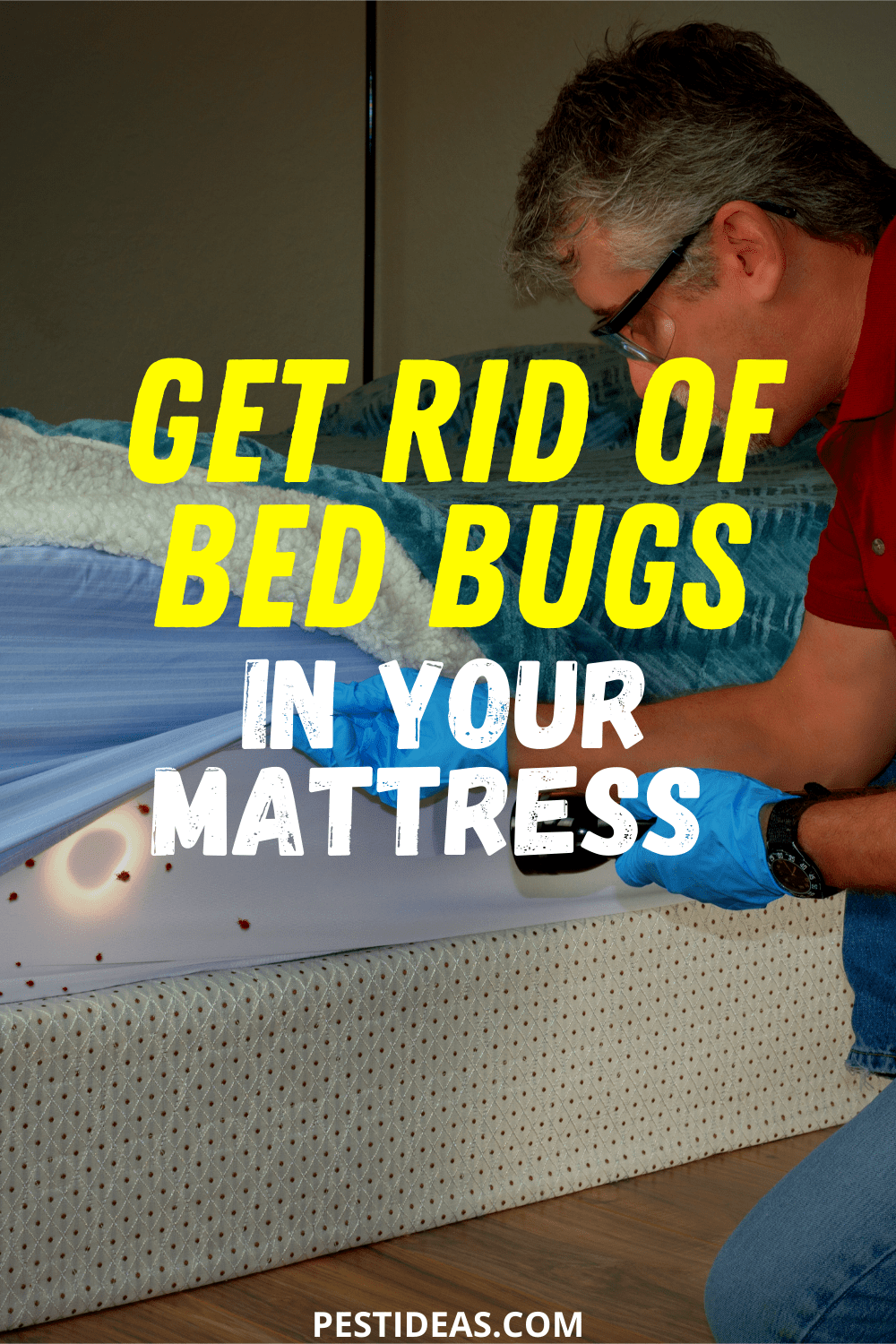 Get Rid of Bed Bugs in Your Mattress