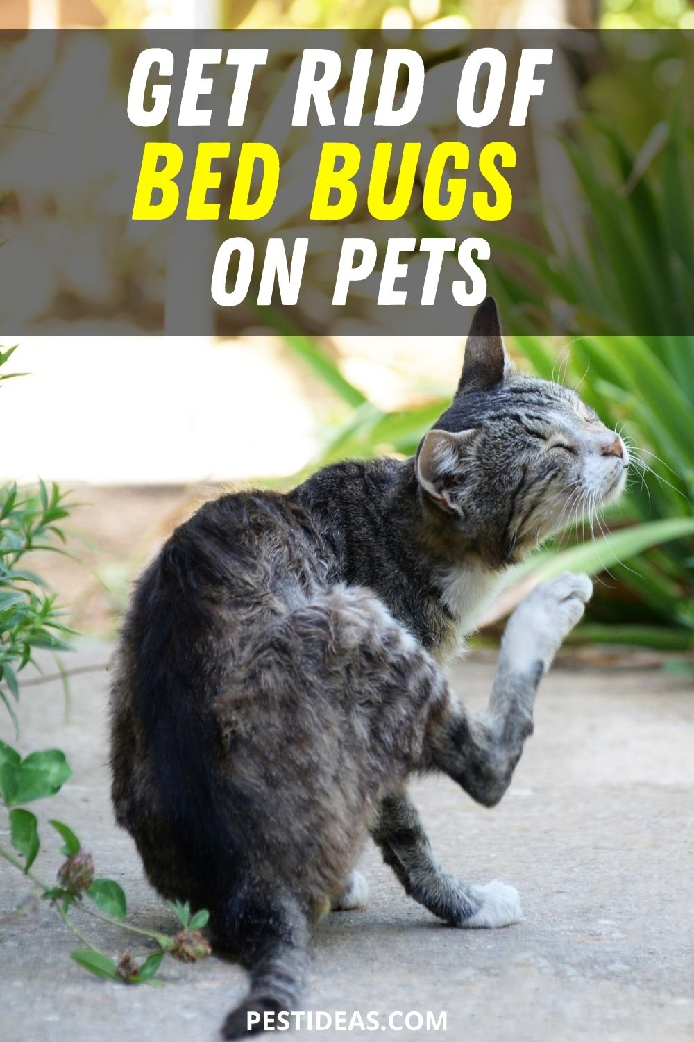 Get Rid of Bed Bugs on Pets