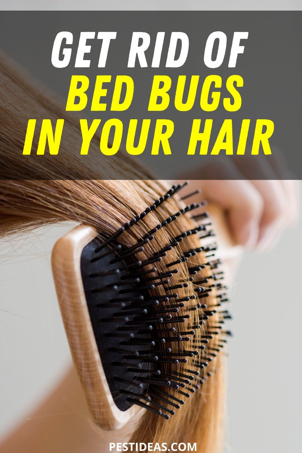 Get rid of bed bugs in your hair