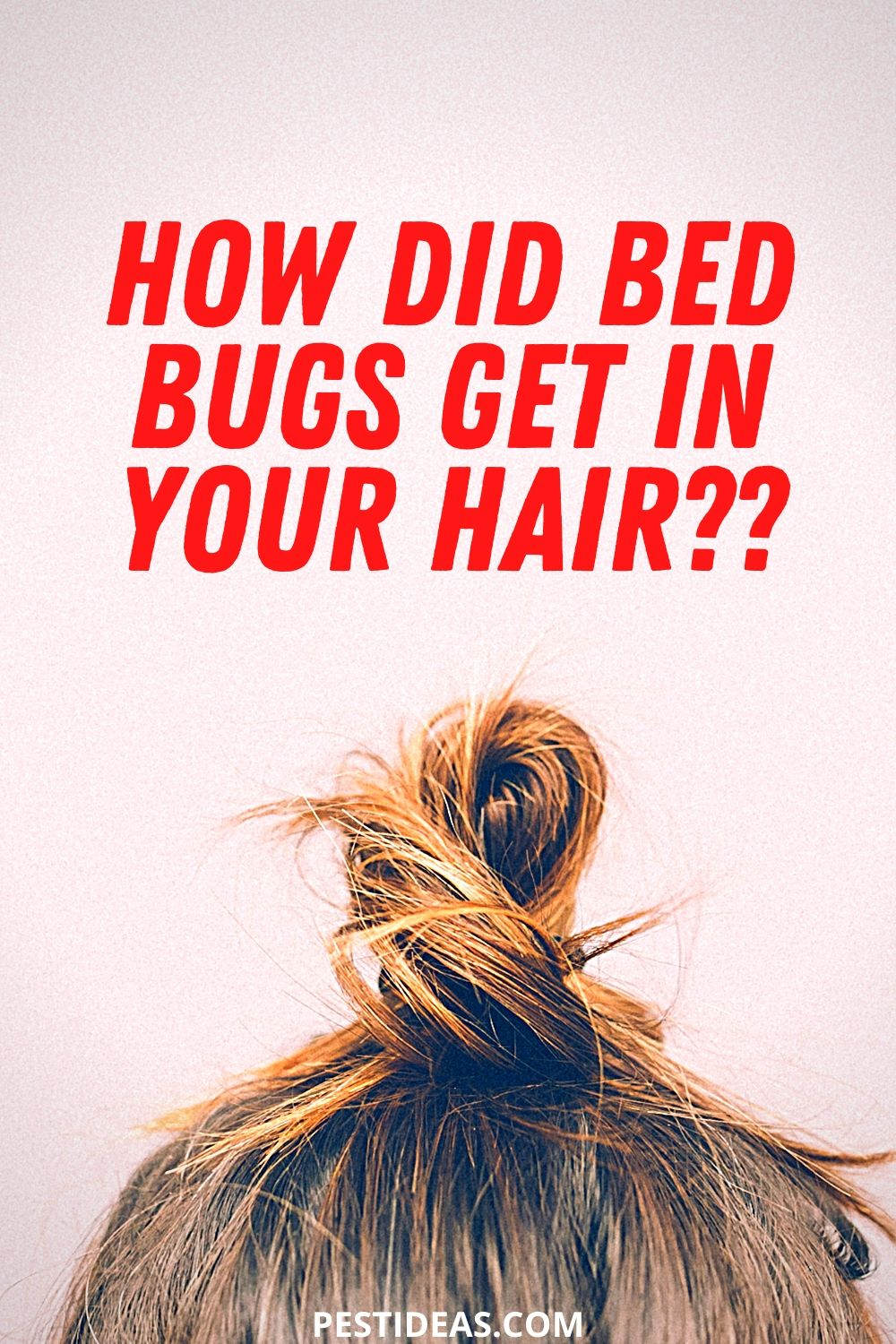 How did bed bugs get in your hair