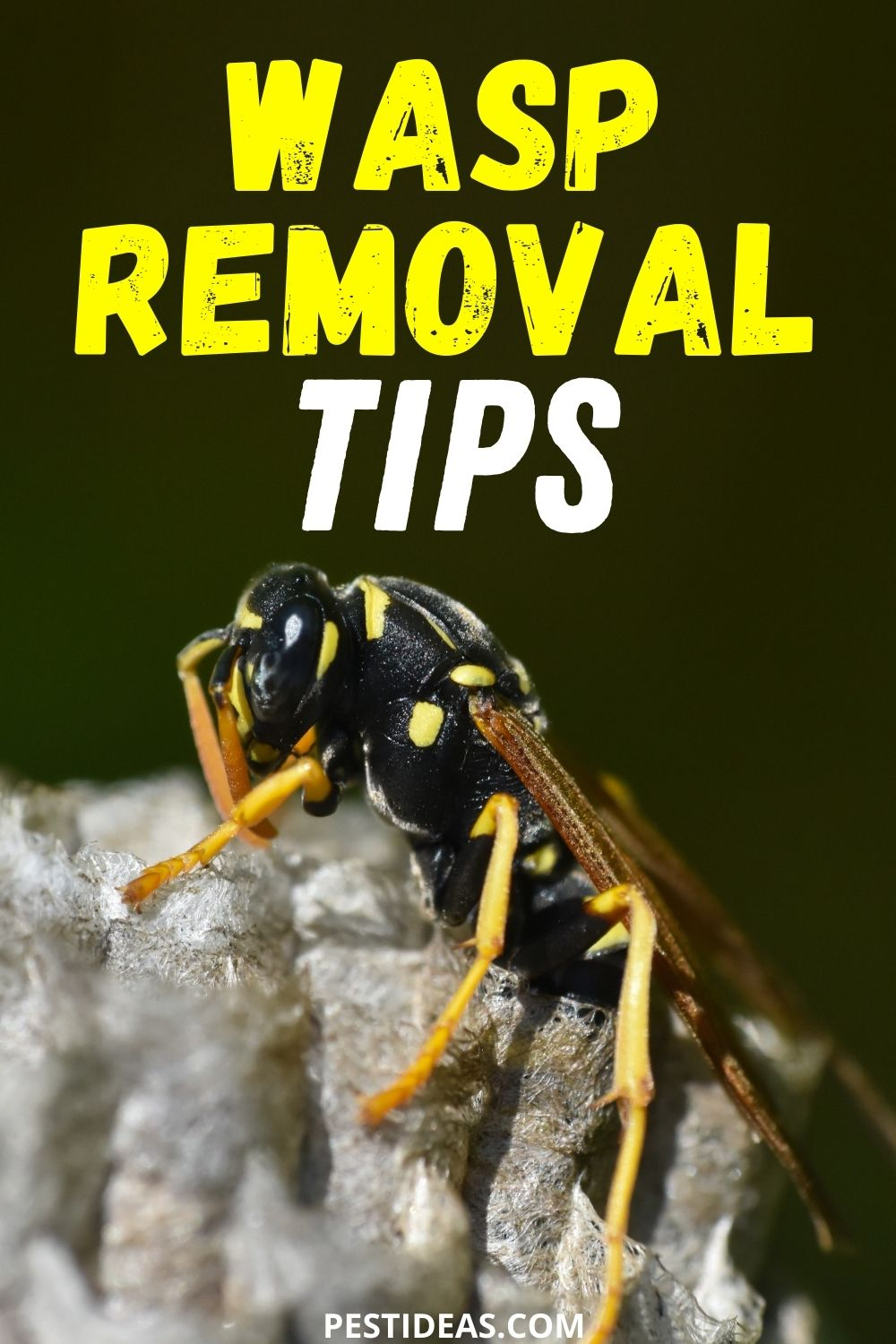 Wasp Removal Tips