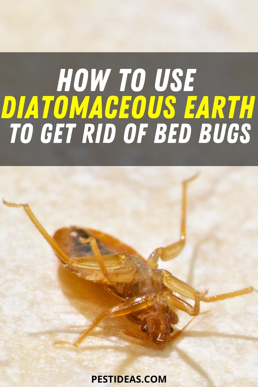 how to use diatomaceous earth to get rid of bed bugs