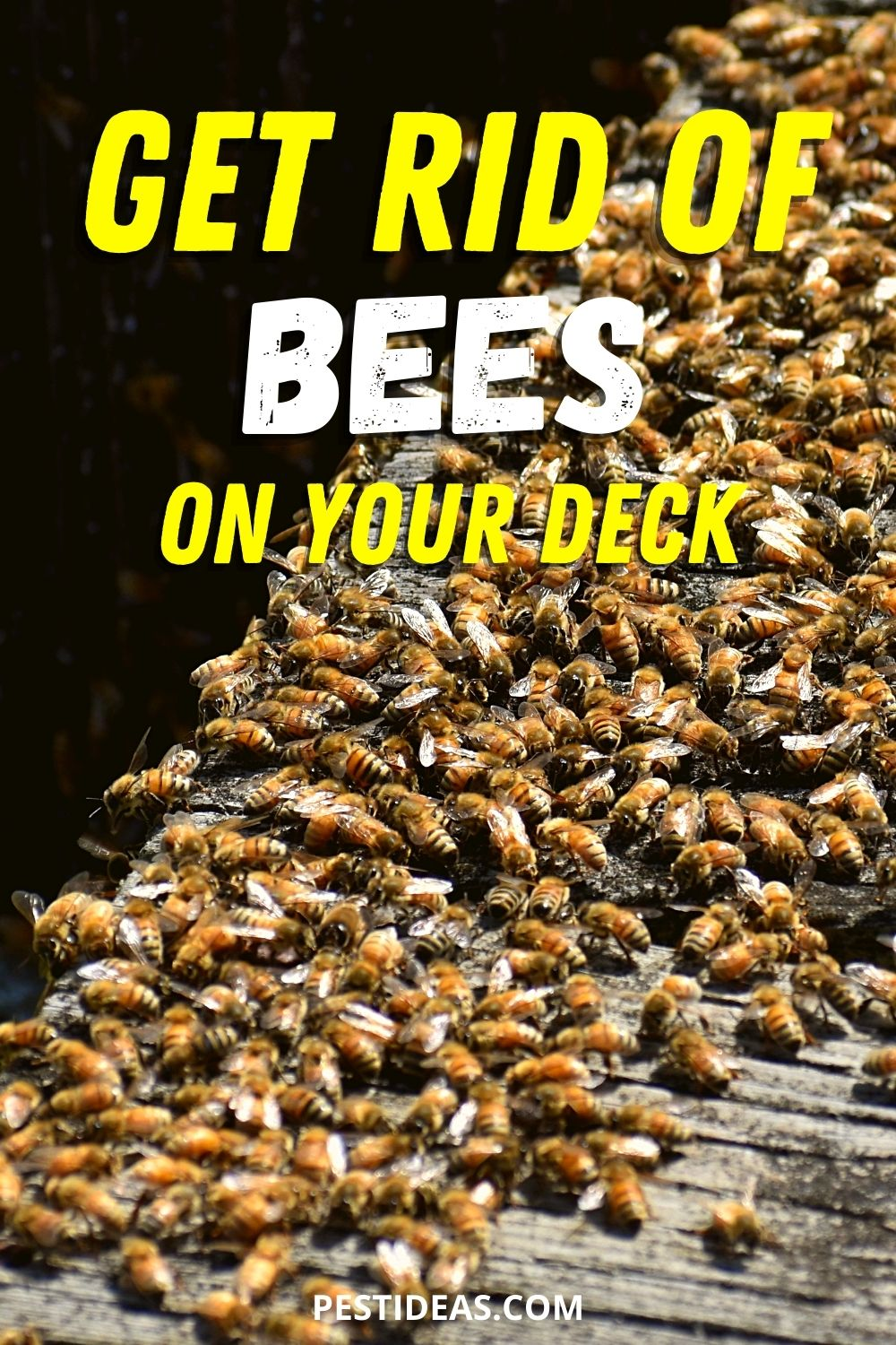 Get Rid of Bees On Your Deck