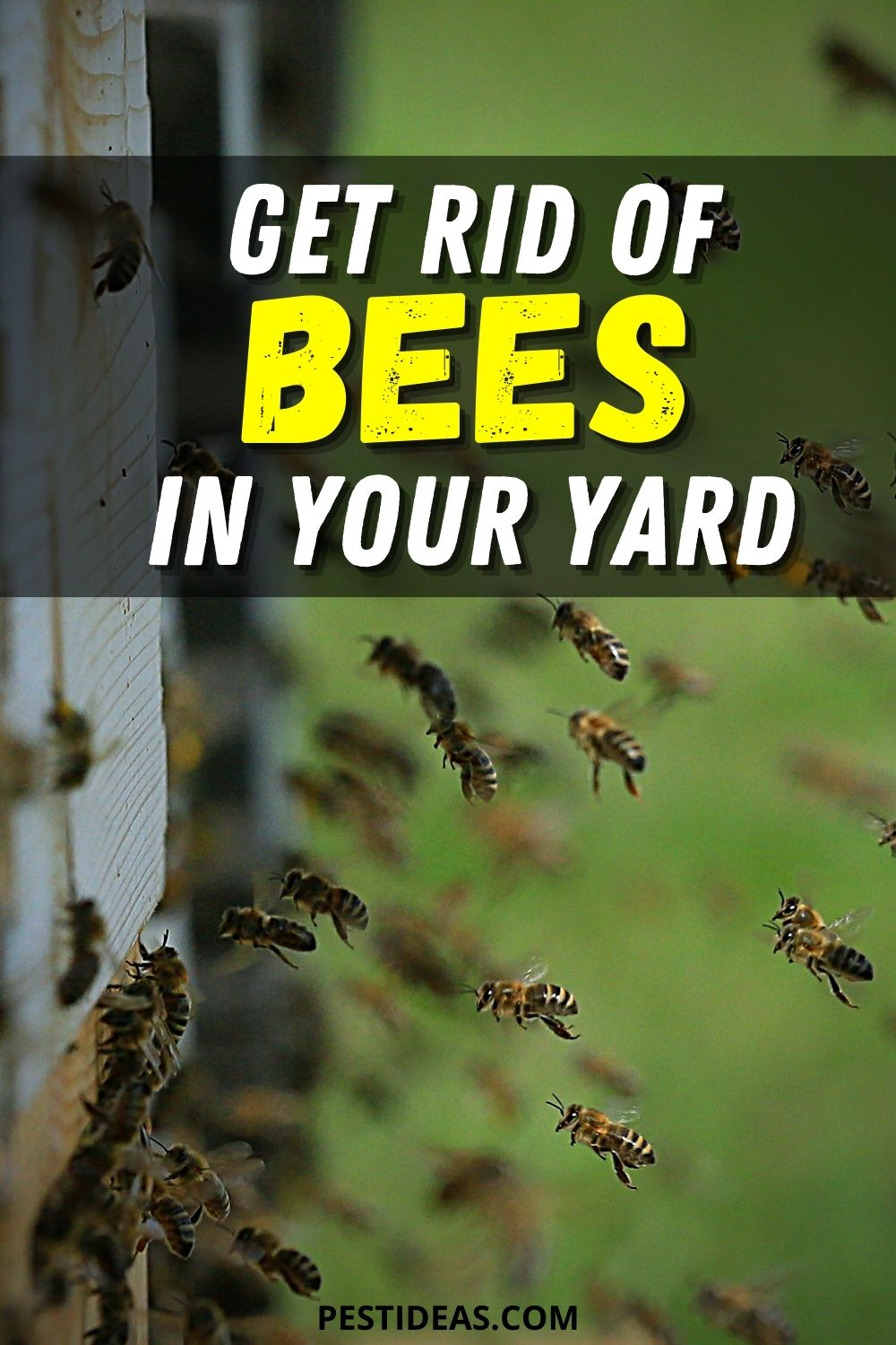 Get Rid of Bees in Your Yard 2
