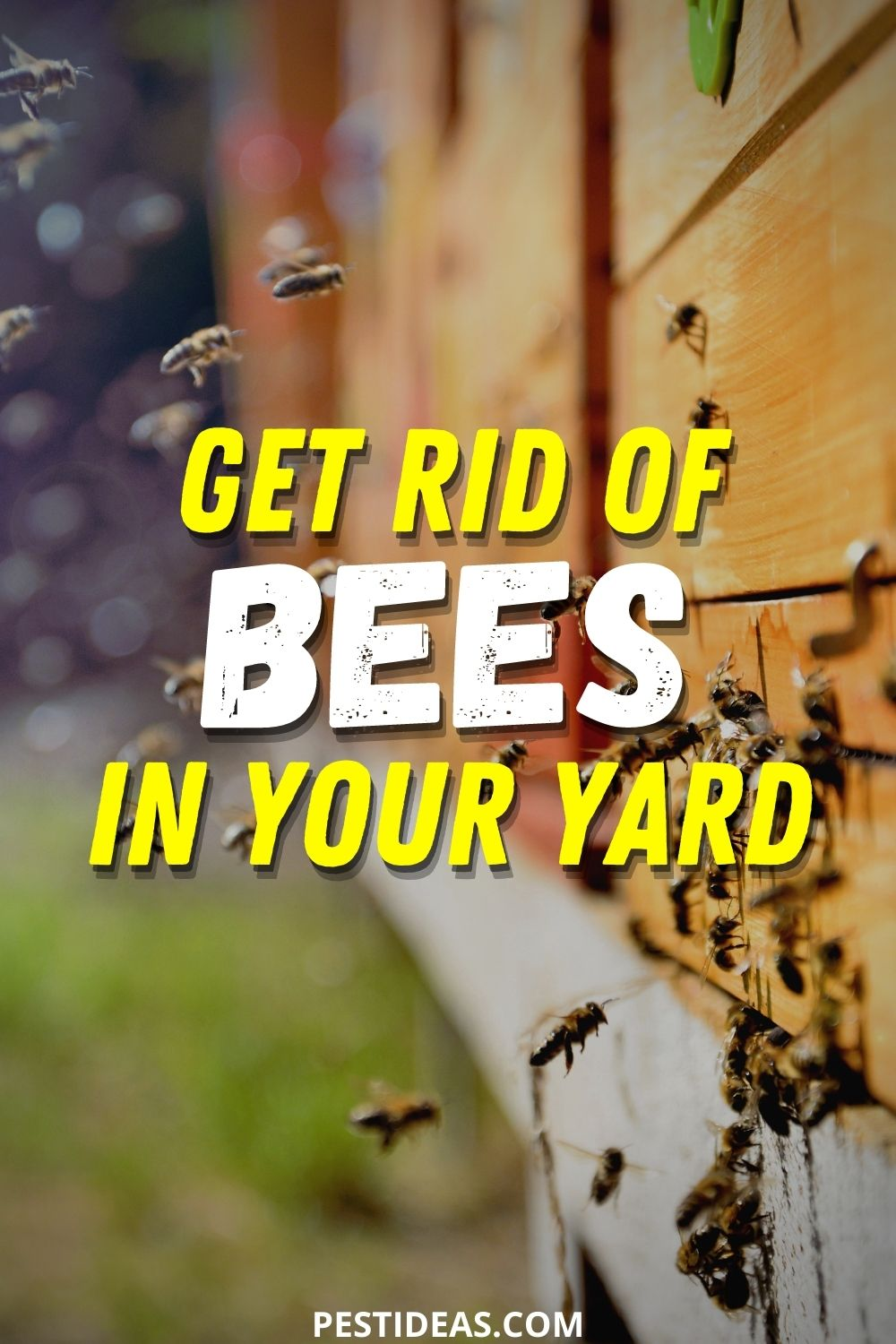 Get Rid of Bees in Your Yard
