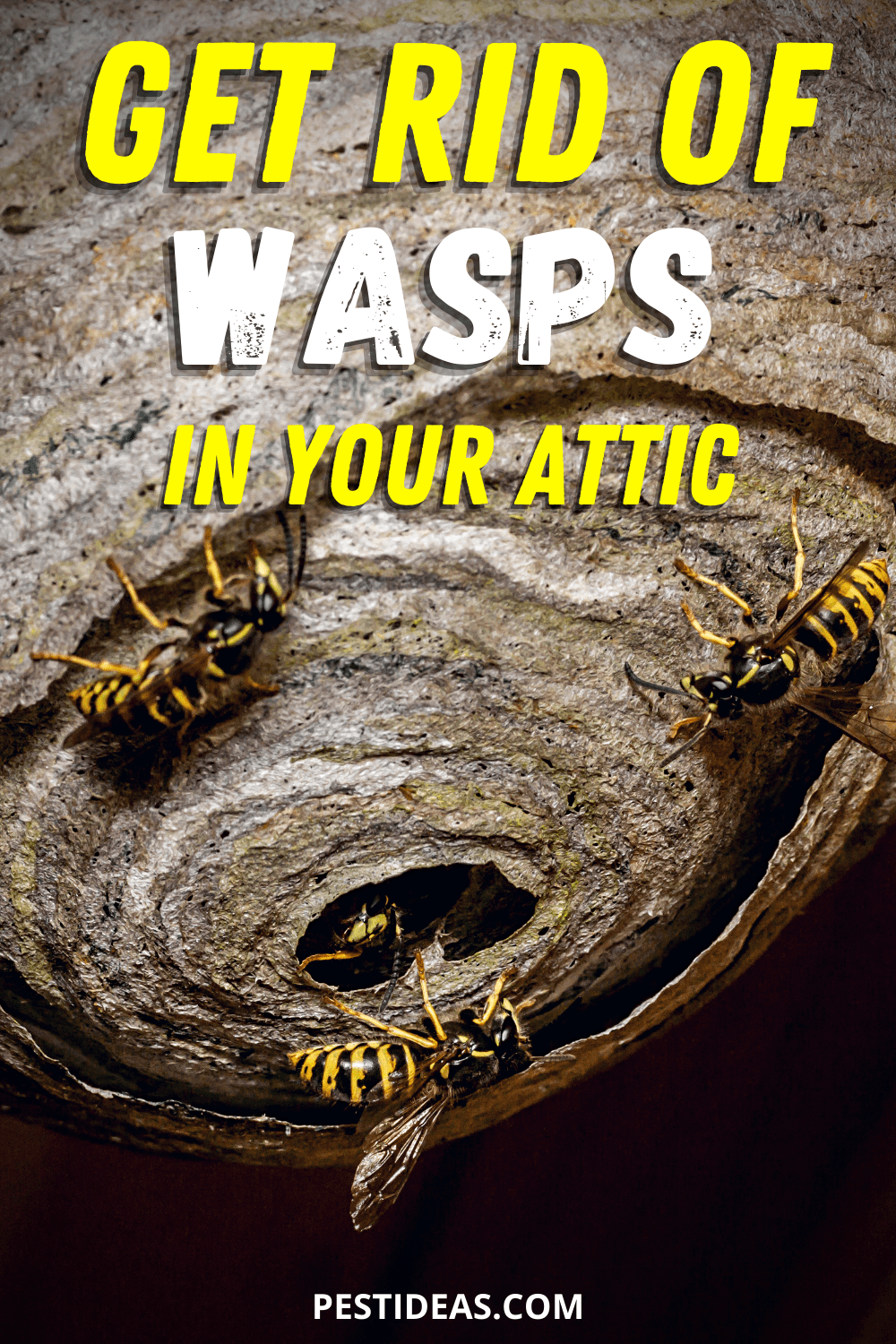 Get Rid of Wasps in Your Attic