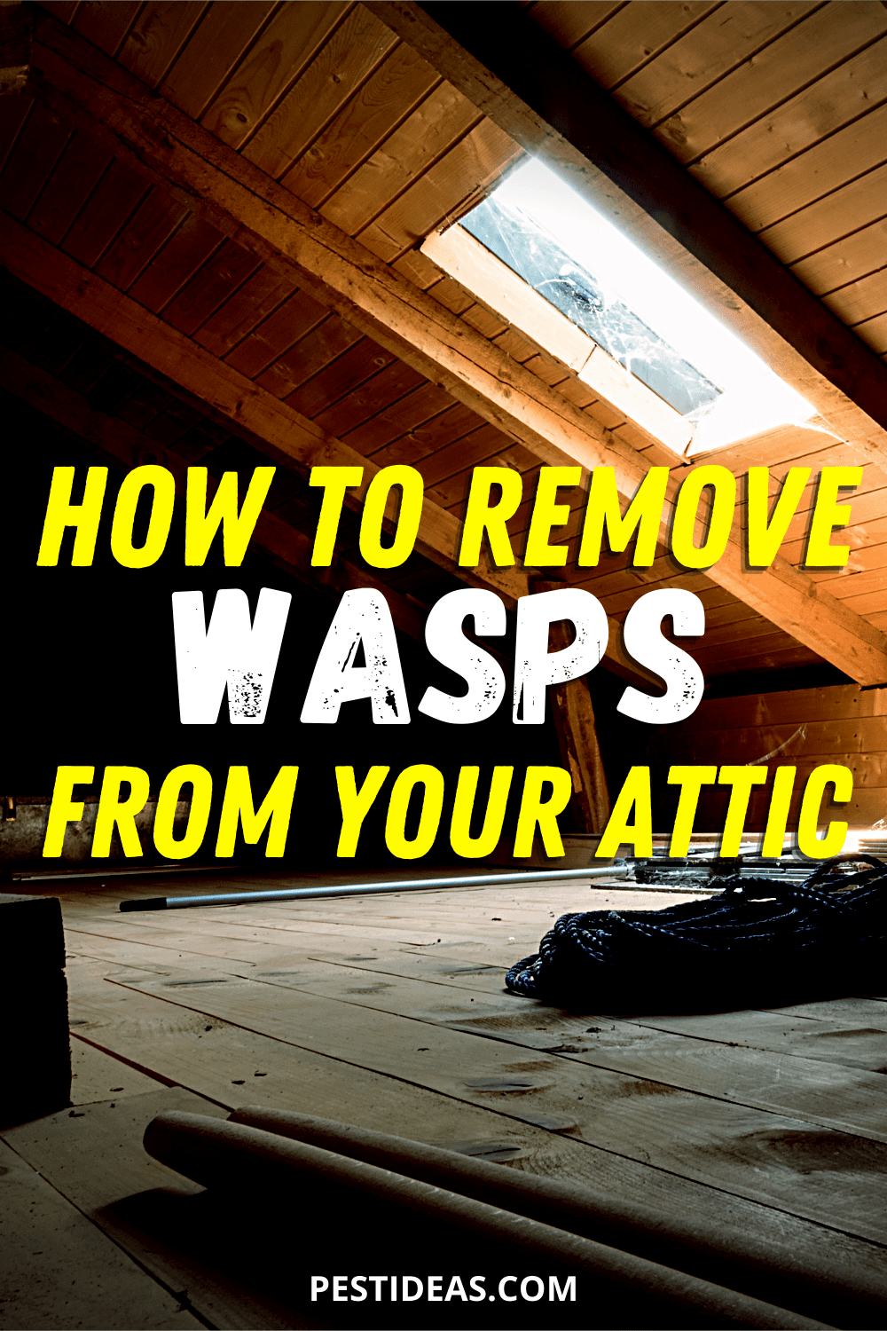 How to remove wasps from your attic