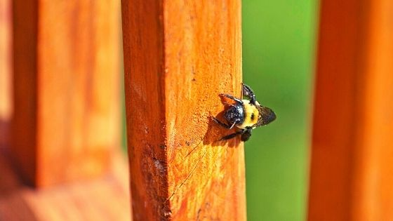 get rid of bees in deck and yard