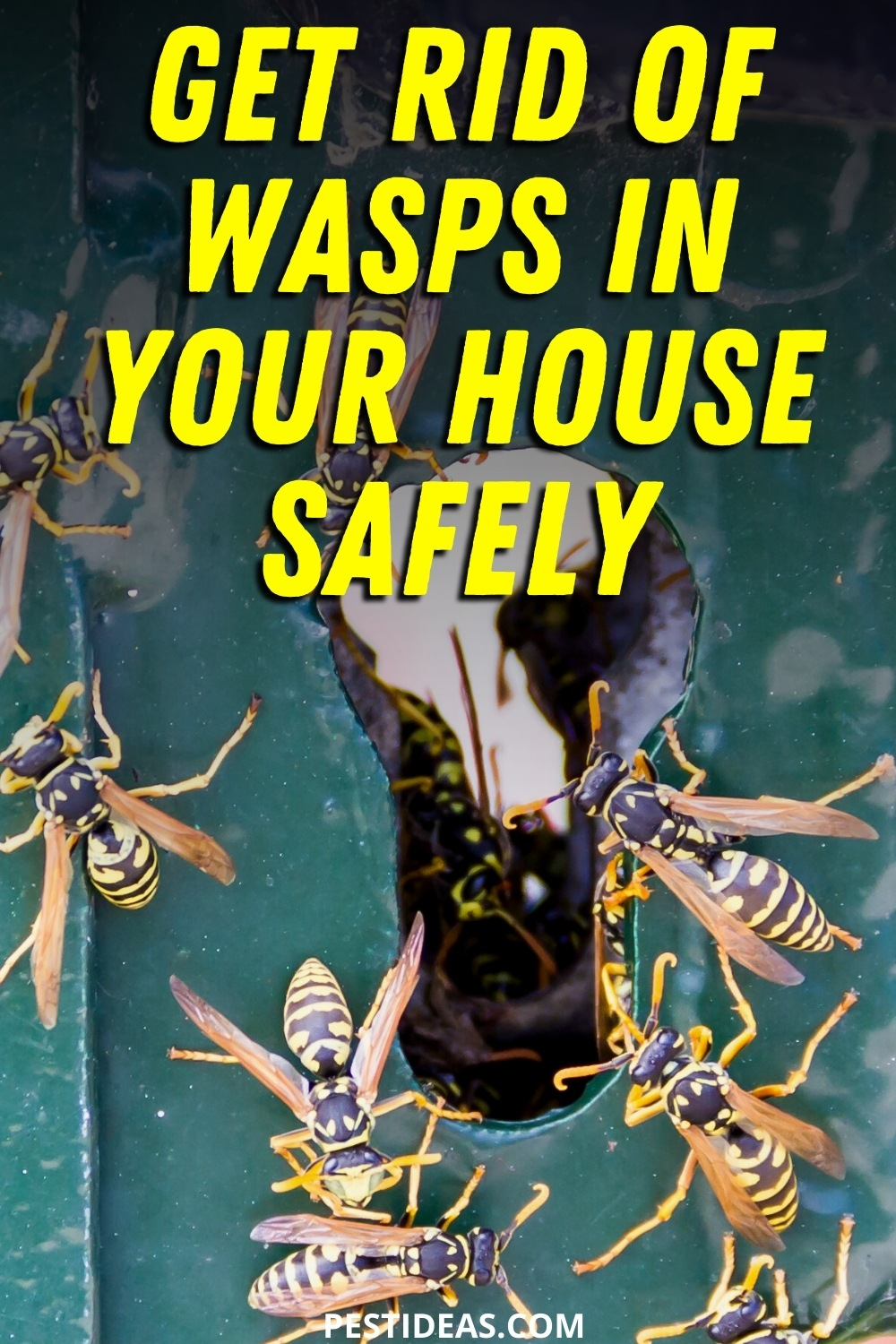Get rid of wasps in your house safely