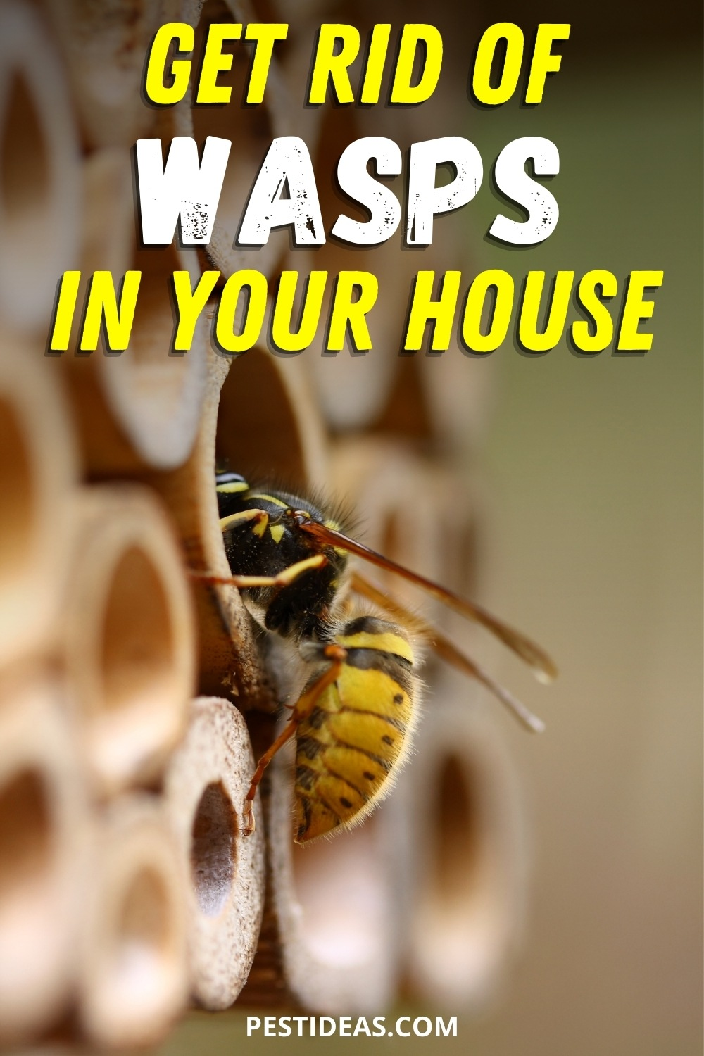 Get rid of wasps in your house