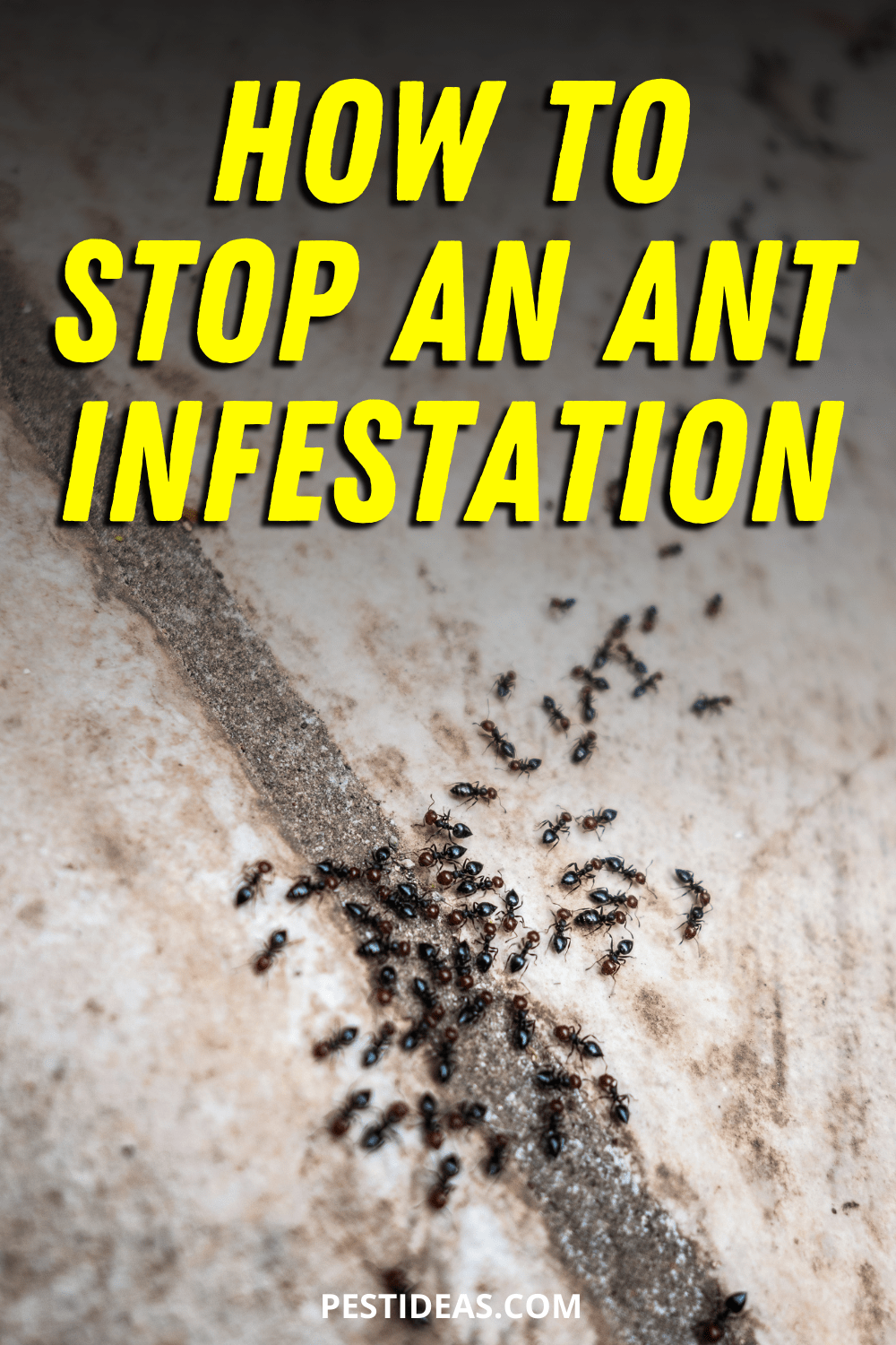 How to Stop an Ant Infestation