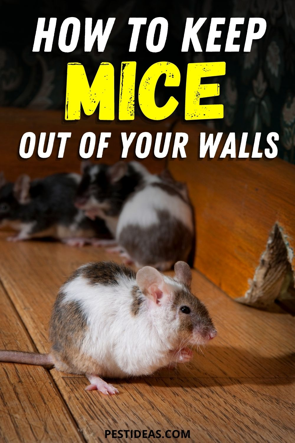 How to keep mice out of your walls