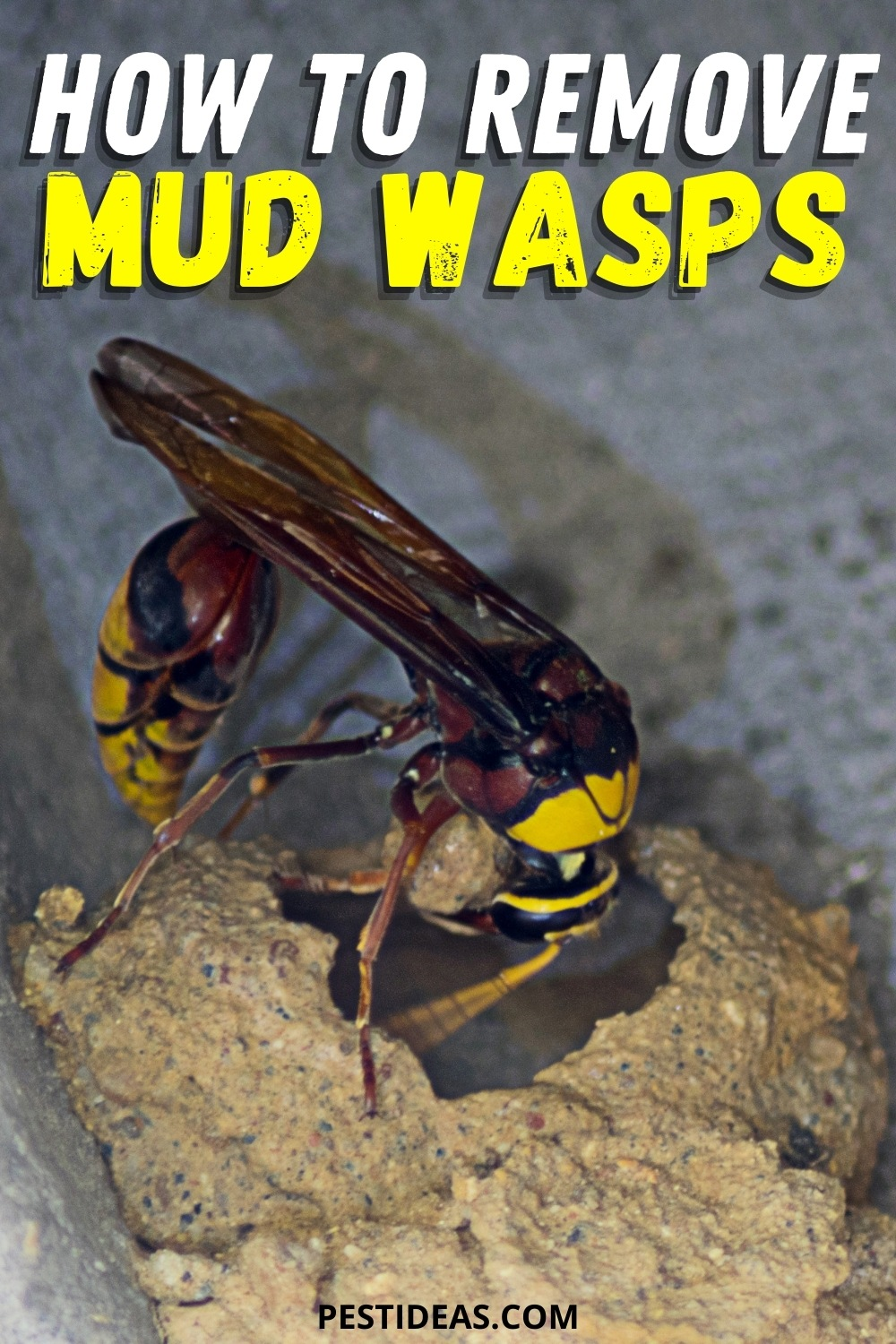 How to remove mud wasps