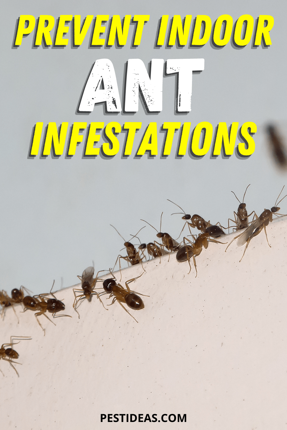 Prevent Indoor Ant Infesations