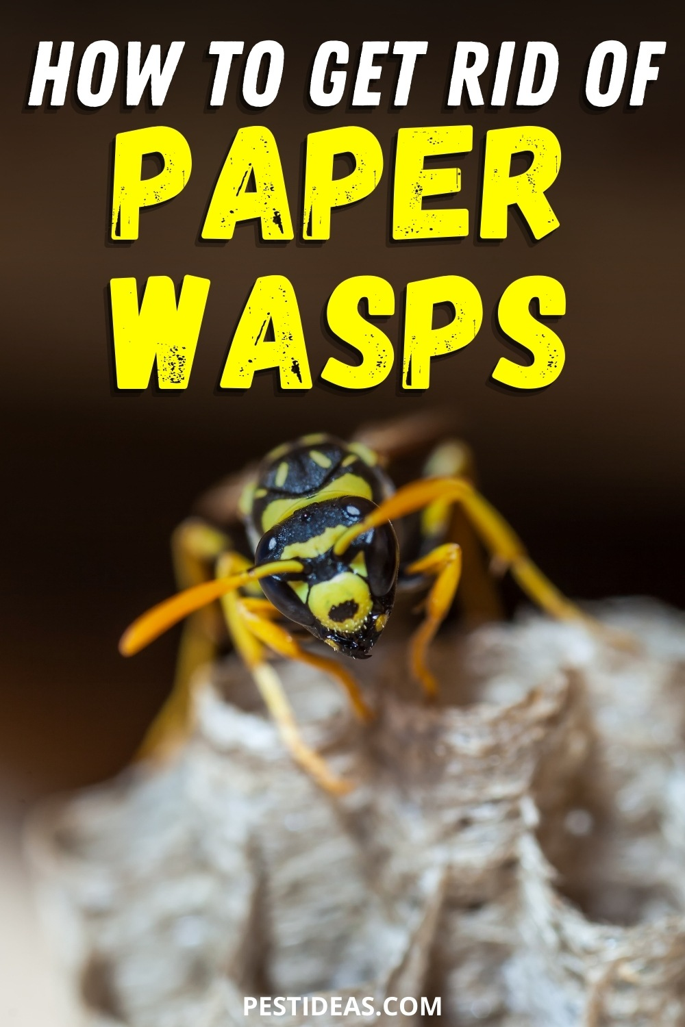 How to get rid of paper wasps
