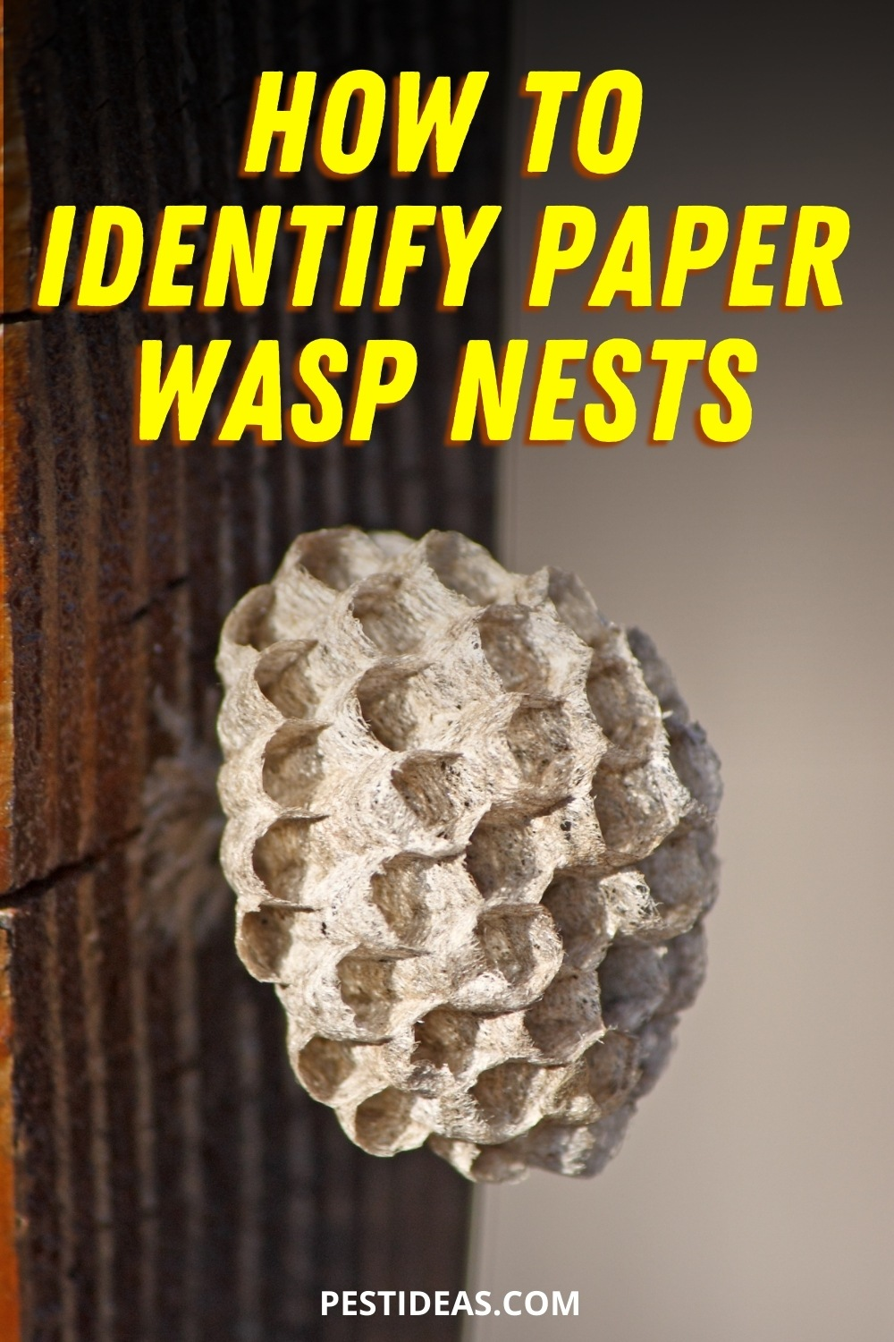 How to identify paper wasp nests