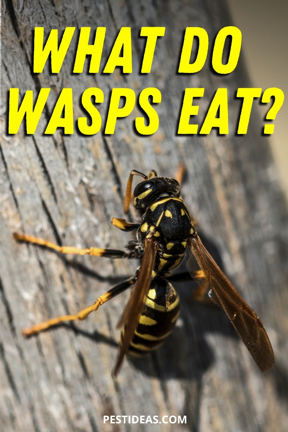 What Do Wasps Eat