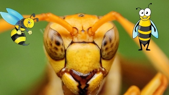 Are paper wasps aggressive