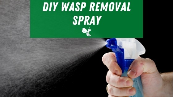 DIY wasp removal spray