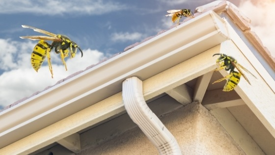 get rid of wasps in gutters