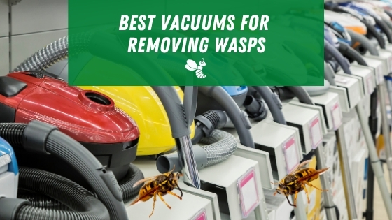 best vacuums for removing wasps
