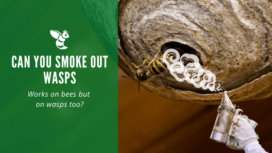 Can you smoke out wasps