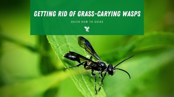 Getting rid of gras carrying wasps