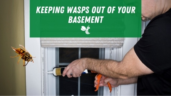 Keeping wasps out of your basement