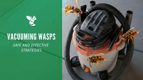 vacuuming wasps