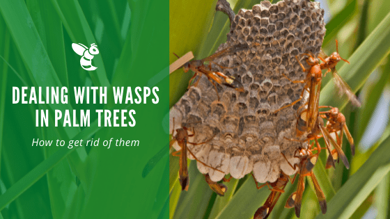 wasps in palm trees