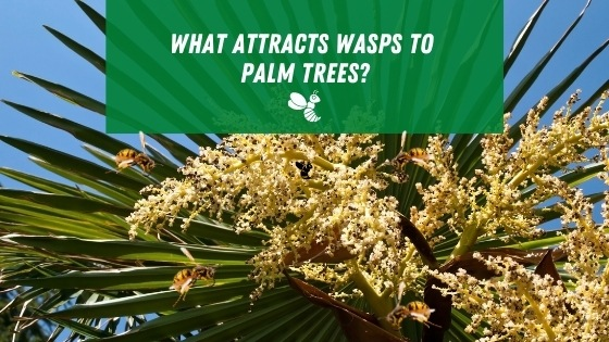 what attracts wasps to palm trees