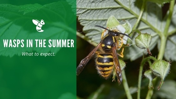 Wasps in the summer