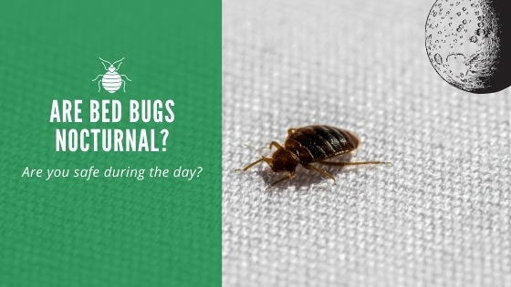 Are bed bugs nocturnal?